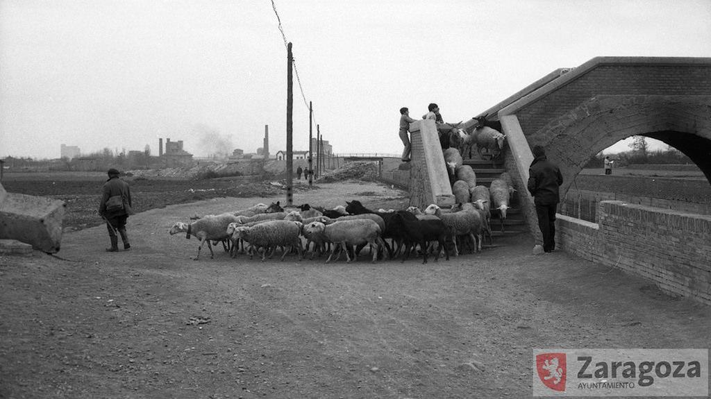 La Granja de San José 1975 - Campos de cultivo de la antigua