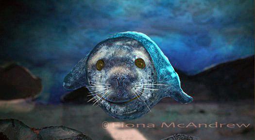 foca-metecandriu