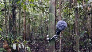 micro en la selva Mikel R. Nieto