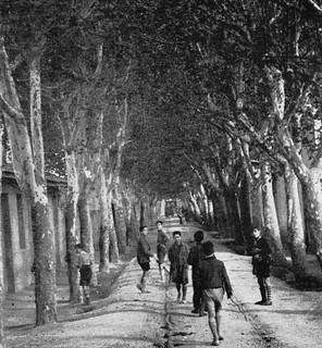 Zaragoza te habla – El Paseo de los Plátanos